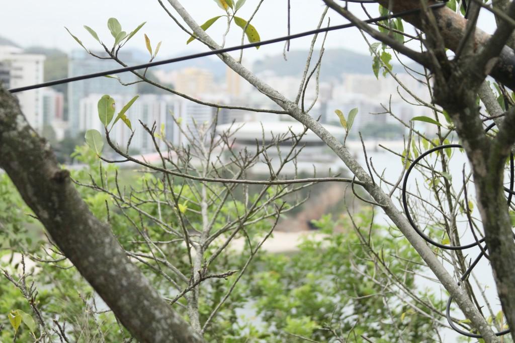 Vista do MAC da Ilha do Boa Viagem. Foto: Taisa Moreno